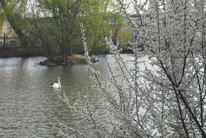 Ilustračný obrázok ku kvízu Ako dobre poznáte mestský park v Lučenci?