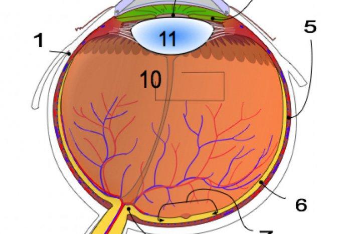 Ilustračný obrázok ku kvízu Anatómia ľudského oka