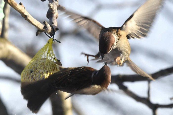 Stiahnite si zdarma ohromujúce obrázky o Zelené Vtáky.